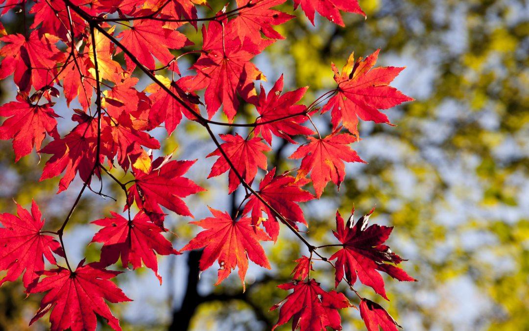 Pierwszy dzień jesieni – mocny czas…